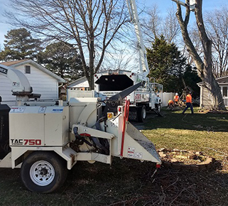 Southern MD Stump Grinding