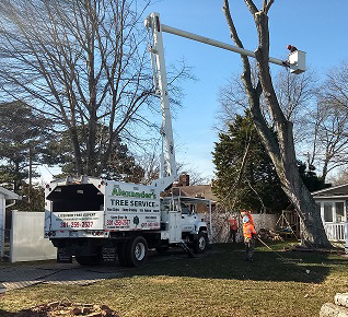 Tree Removal Charles MD