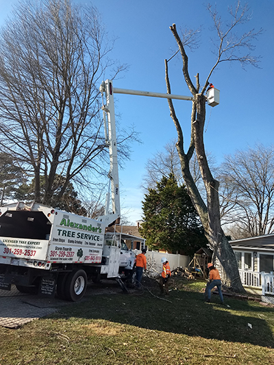 Tree Trimming Southern MD